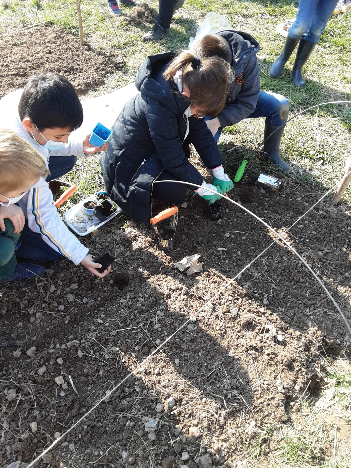 Un jardin bio dans notre école – Les CE mettent en terre leurs plants!