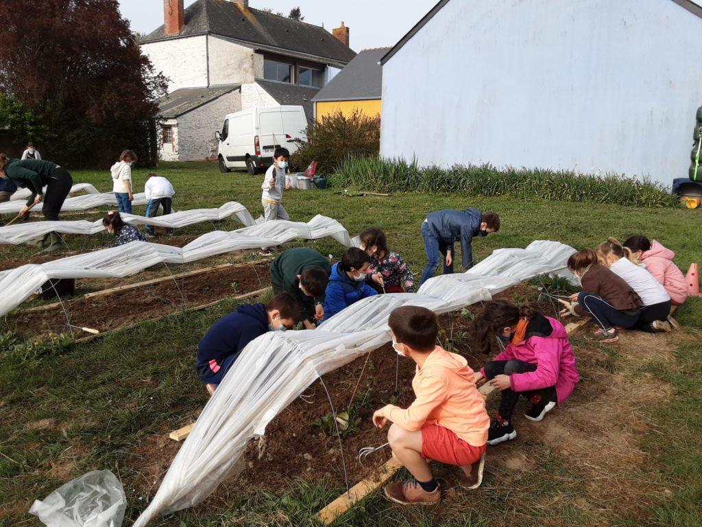 Un jardin bio dans notre école – Les CE découvrent leurs premiers radis et navets!