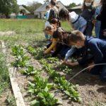 Un jardin bio dans notre école – Les CE mangent leur récolte!