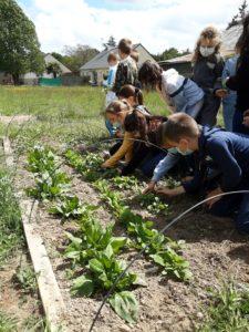 Read more about the article Un jardin bio dans notre école – Les CE mangent leur récolte!