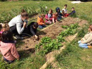 Read more about the article Ça pousse dans le jardin!