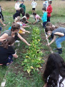 Read more about the article Un jardin bio dans notre école – Les CE font un bilan de leurs connaissances.