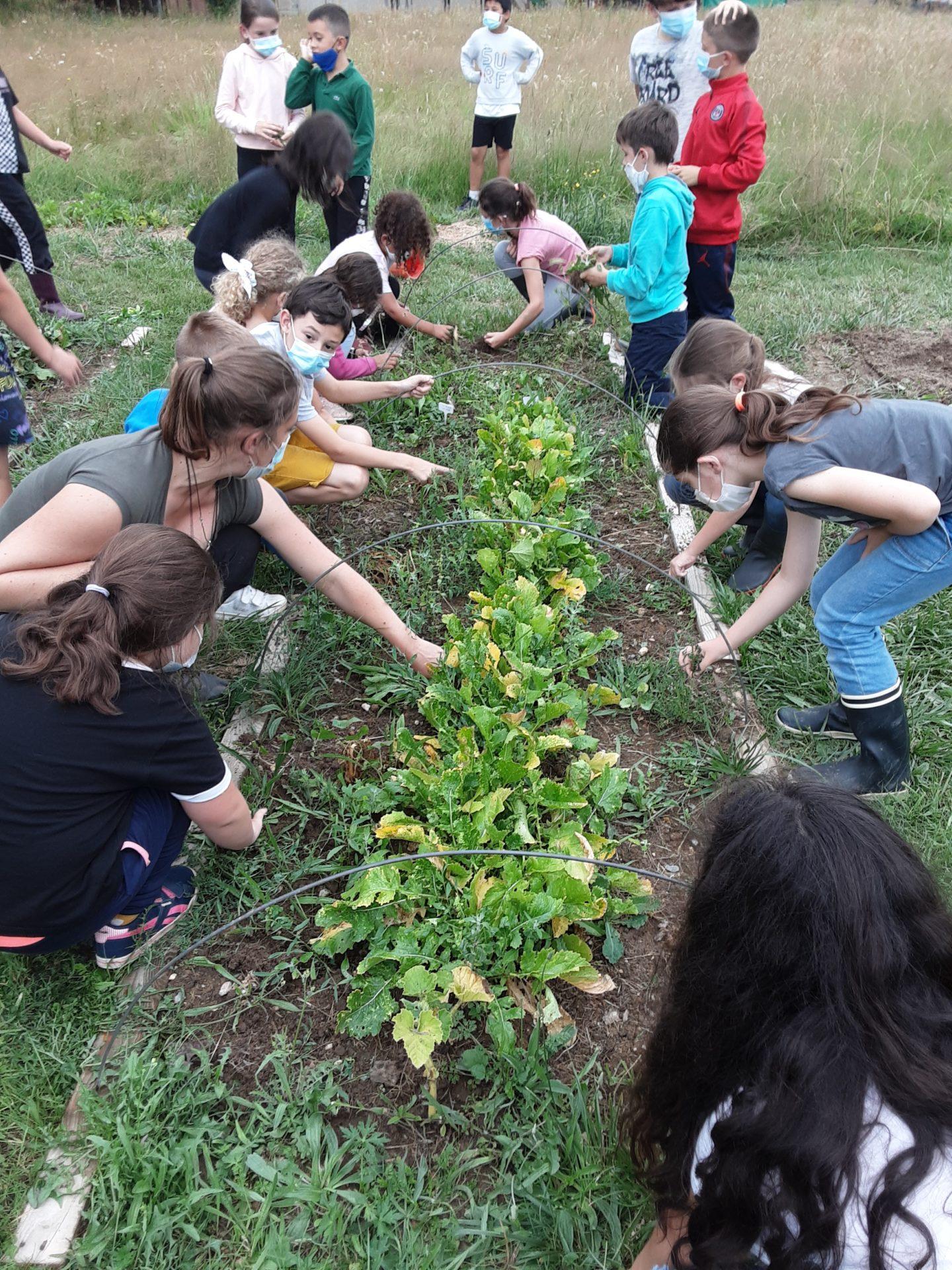 Un jardin bio dans notre école – Les CE font un bilan de leurs connaissances.